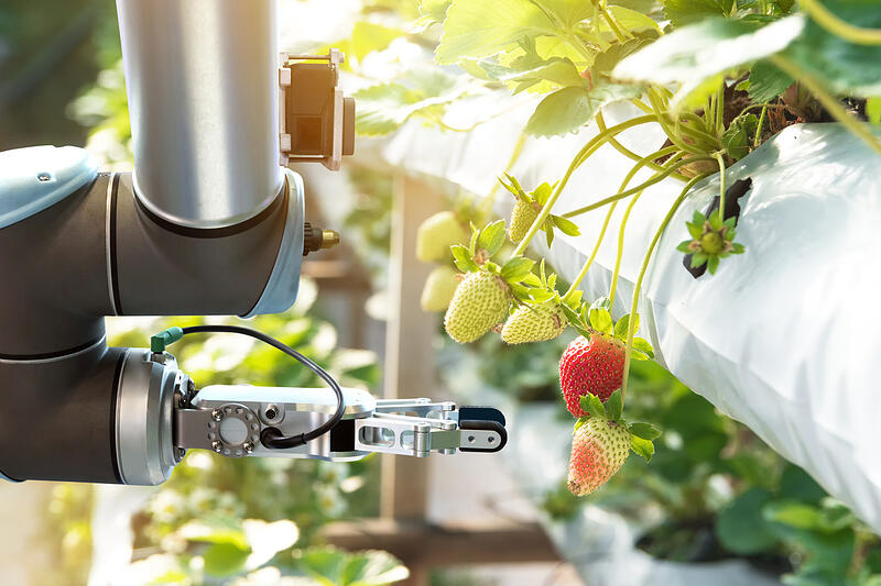 Agriculture technology - Farmer use smart farm automation robot assistant image processing for detection