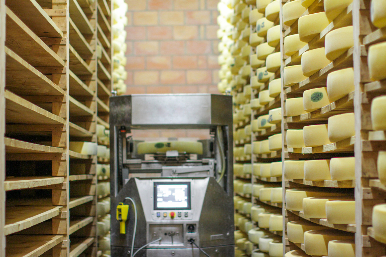 Modern-traditional-cheese-making-with-high-tech-robot-assisting